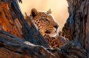 Conservation - Pic of Leopard in a tree