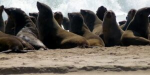 Seal & Dolphin Boat Tours - Walvis Bay