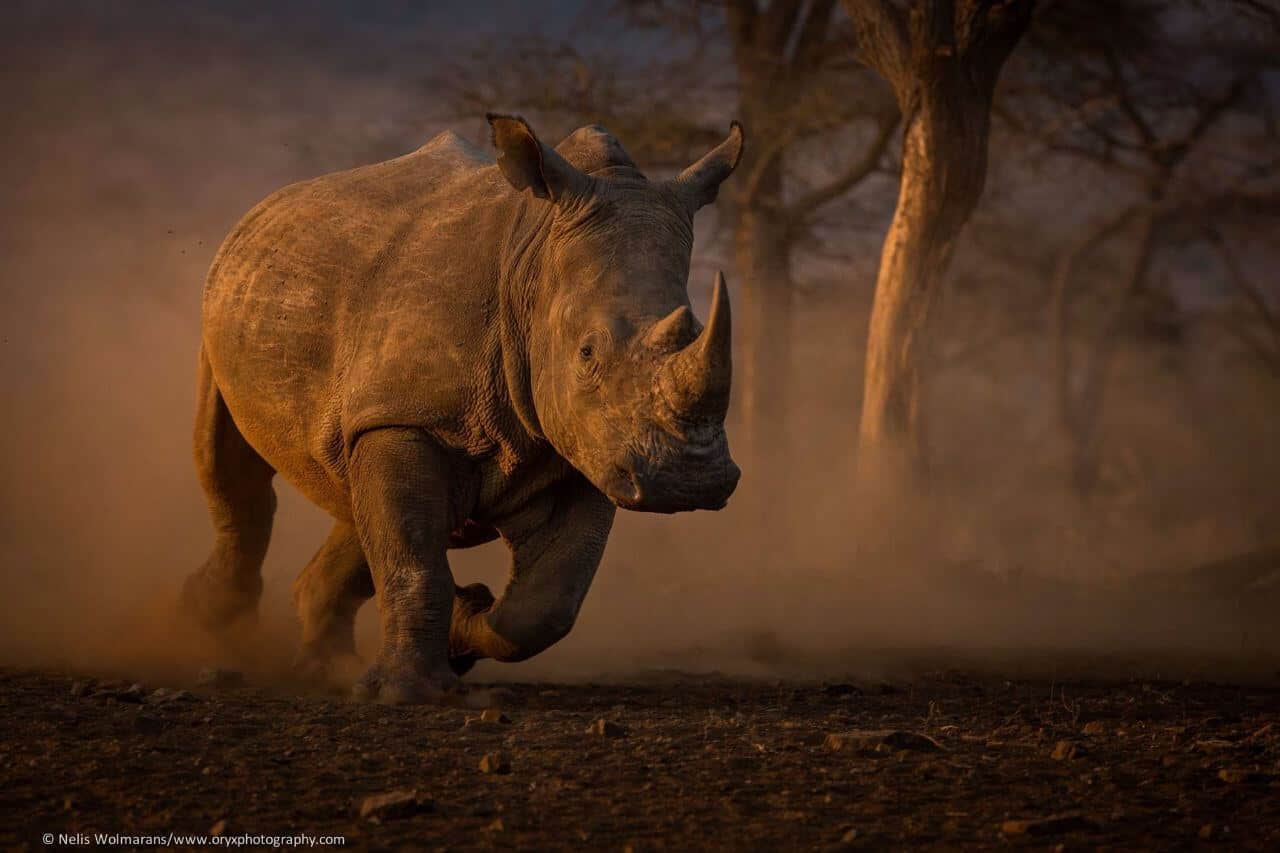 Requirements To Rent A Car >> Save the Rhino Trust - Book Namibia Accommodation