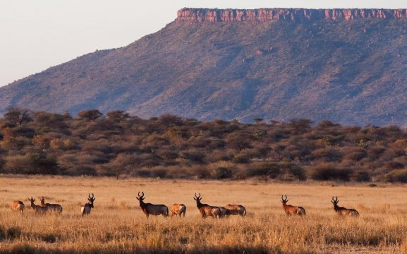 Accommodation near Waterberg Namibia with game