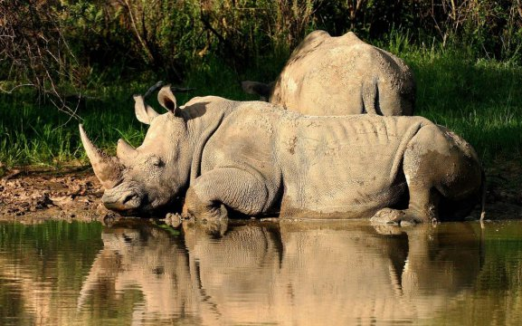 Waterberg Wilderness Private Game Reserve - activities include Rhino tracking