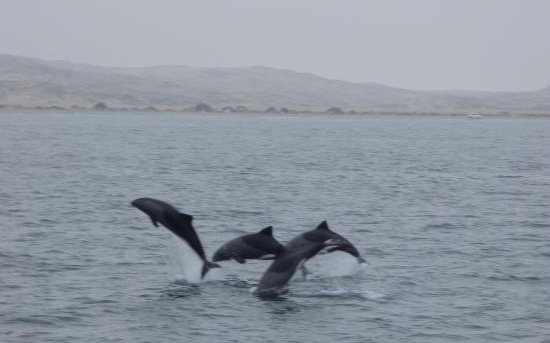 Boat tours Luderitz - see the dolphins.