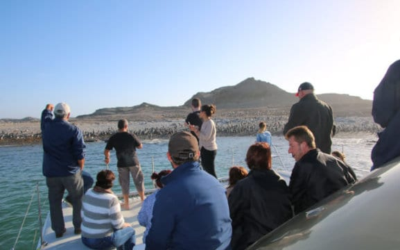 Penguin Watching Luderitz