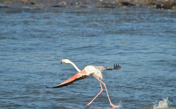 Zeepaard Boat Tours - see the Luderitz flamingos